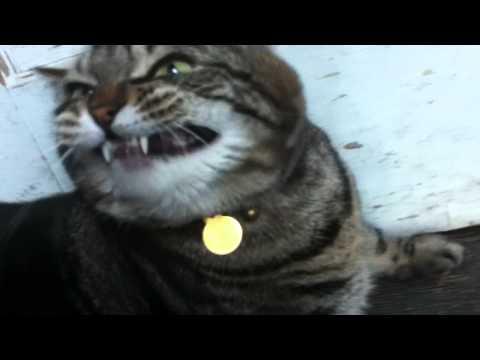 Funny Cat Butt Scratch