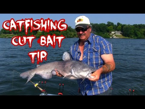 FLATHEAD CATFISH RIGGING and BAIT TIPS! from YouTube · Duration:  6 minutes 37 seconds  · 204,000+ views · uploaded on 6/5/2014 · uploaded by TeamCatfish1
