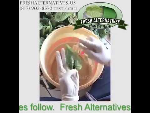 Fresh Alternatives, LLC  Kratom and more herbs in Dallas Fort Worth, Texas