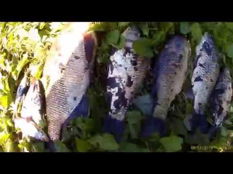 шатурские озера фидер