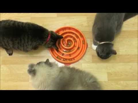 Canine slow feeder bowls can be great for cats too!