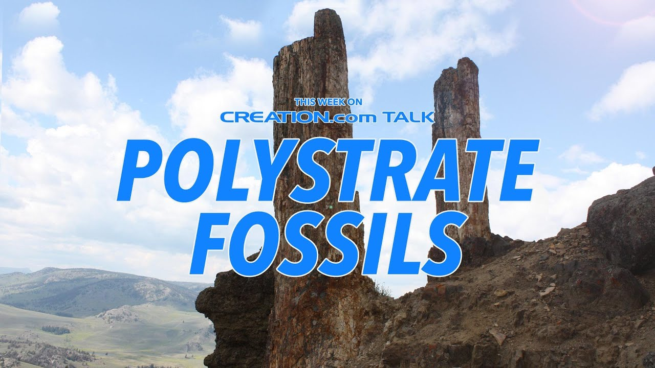Polystrate Fossils