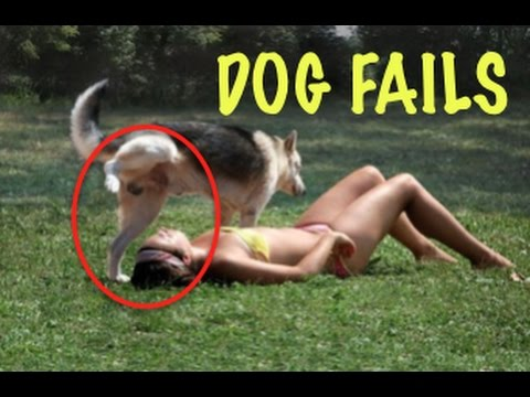 FUNNY Dog Fails Compilation 2017 – Dogs Do Stupid Things!