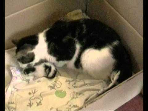 Bevalling poes - Birth kittens Sjoukje