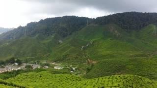 Bharat Tea Plantations of Cameron Highlands-Malaysia (May 2015)