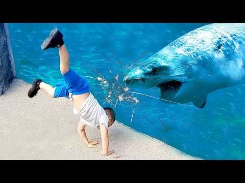 Funniest Moments Baby Meet Animals  Life Funny Pets Video 2020