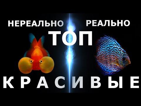 Вопрос: Как акклиматизировать аквариумную рыбу?