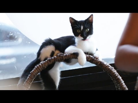 The First Cat Cafe Has Opened in LA