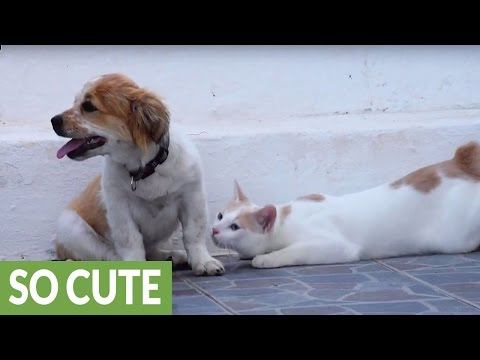 Cat introduced to puppy, cuteness overload ensues