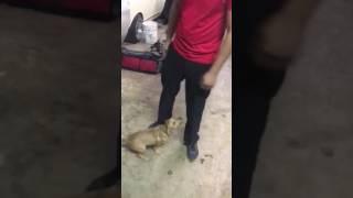 Puppy luv pt 2