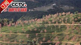《城市1对1》 20170423 奇幻之境 中国 南涧——马来西亚 雪兰莪 | CCTV-4