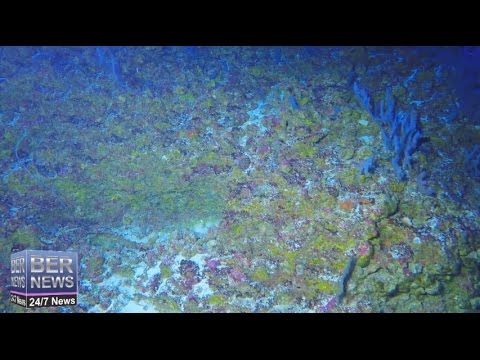 """Biological Hotspot"" Found On Argus Seamount, August 2016"