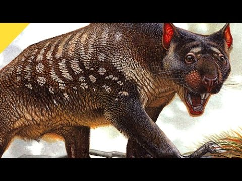 Marsupial Lion Killed Prey Unlike Any Living Predator | Prehistoric News
