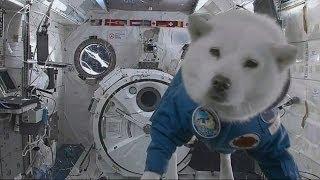 Собака в космосе/Dog in Space