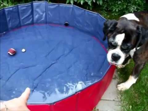 Karlie Doggy Pool