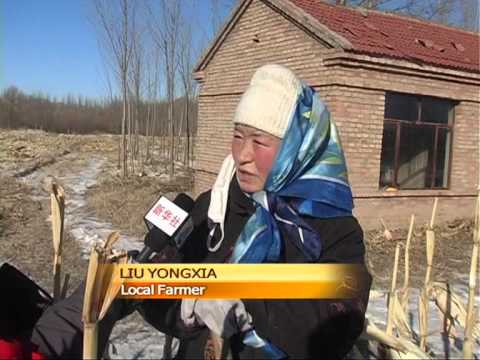 Snow affects 770,000 people in Inner Mongolia
