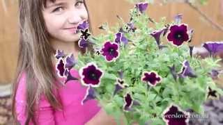 видео Ампельные растения для сада, балкона и террасы