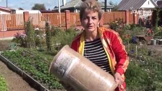 Виноград - как укрыть на зиму правильно молодой: видео, способы и виды укрытий