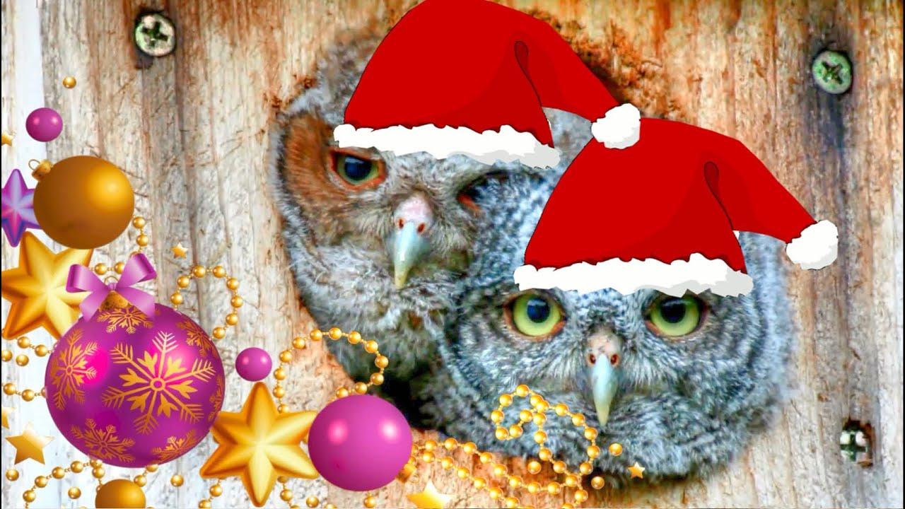 we wish you a merry christmas baby owls youtube - Owl Christmas