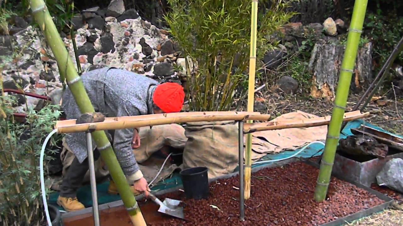 Verde bamb a primavera in giardino youtube for Bambu giardino