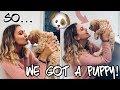 SOOO... WE GOT A PUPPY!!! Bringing home our Cockapoo!