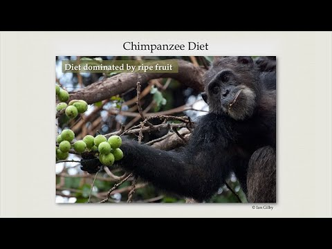 The Role of Hunting in Anthropogeny: Ian Gilby-Pan the Hunter: Explanations for Chimpanzee Predation
