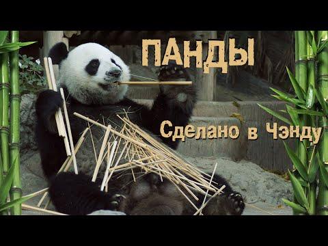 Как живут панды