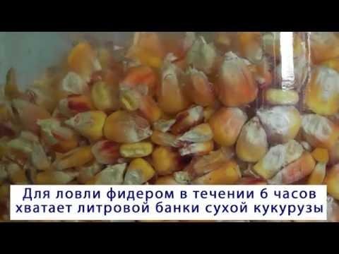 Как приготовить кукурузу для прикормки?