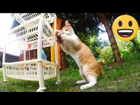 Cats playing 4k UHD 🐈 🐱 (No Copyright Music) The Land Of Happiness - Nicolai Heidlas