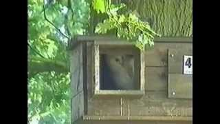 Barn Owl Centre;s Nest Box Successes