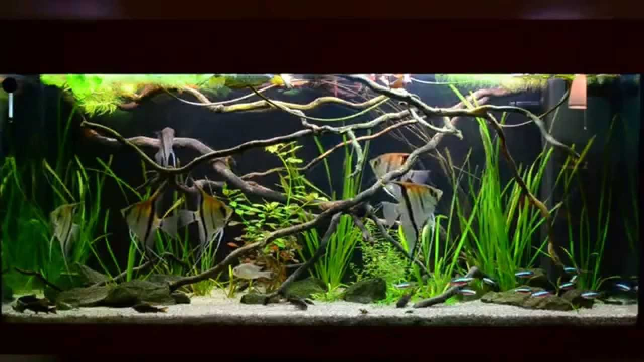 Amazon biotope aquarium 3 youtube for Amazon fish tanks for sale