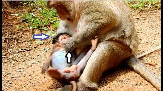 DEEP HURT ! Why Mom Monkey Do That To Her Baby | Lovely Baby Lizza Cries Hurt In Heart
