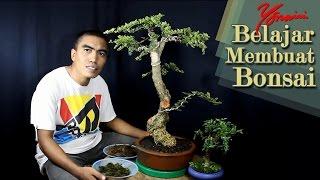 Bonsai Kawista #09 - Cara Menumbuhkan Lumut Hijau