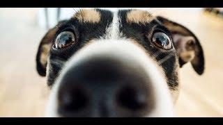 Неприятный запах от собаки?