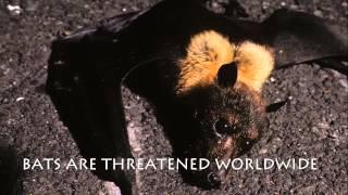 Bat Conservation International - We Need Bats & Bats Need Us
