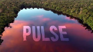 Rising Appalachia + Dirtwire - Pulse (Official Video)