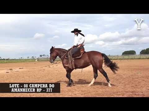 LOTE   08 CAMPERA DO AMANHECER RP   377