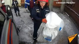 Енотовидная собака устроила переполох на заводе в Челябинске