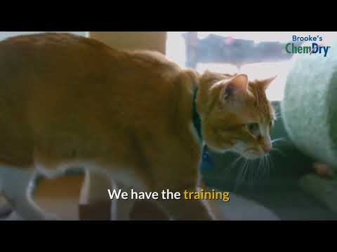 Best Carpet Cleaners For Cat Urine | How To Get Cat Urine Smell Out Of Carpet