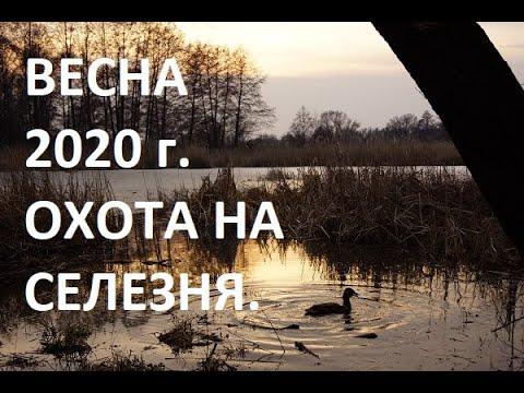 ОТКРЫТИЕ ВЕСЕННЕЙ ОХОТЫ 2020 г. ОХОТА НА СЕЛЕЗНЯ.