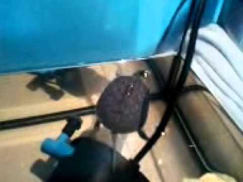 ma tortue d 39 eau douce youtube