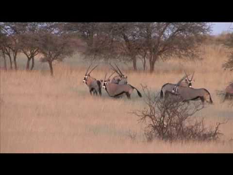 Hunting Gemsbok In Africa