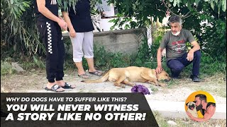 WHY DO DOGS HAVE TO SUFFER LIKE THIS? YOU WILL NEVER WITNESS A STORY LIKE NO OTHER!