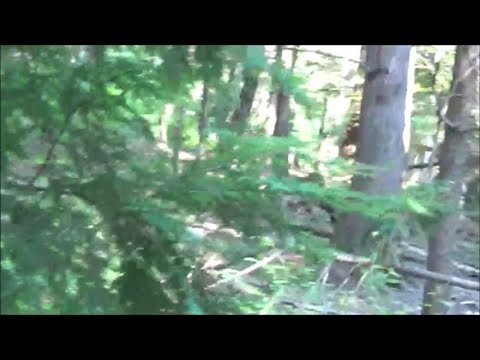 #Projectgoandsee - REAL SASQUATCH filmed in New Hampshire - Multiple Speeds