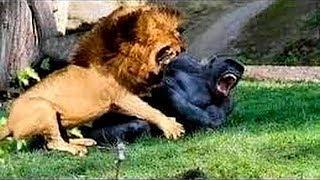 10 Самых ЖЕСТОКИХ нападений животных друг на друга