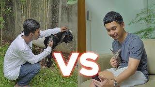 RADIT KUCING VS PANDU KAMBING! SIAPA MENANG?