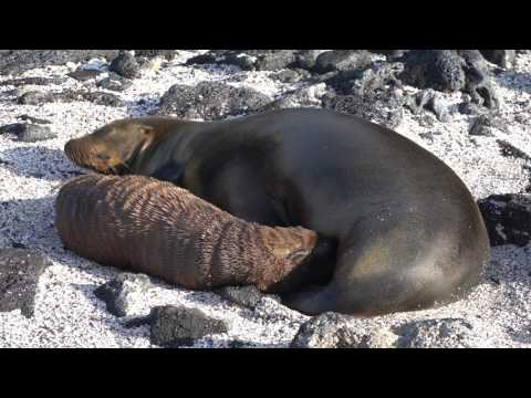 "8D Itinerary ""B"" on the Natural Paradise - Luxury Galapagos Yacht"