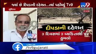 'Man Eater' leopard left Amreli villagers terror-stricken   TV9GujaratiNews