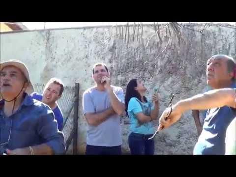 560 ) – PODA DA UVA BORDO DE 2 ANOS EM PIRACICABA – SP SP-  PARTE UM      108a Bordo Poda