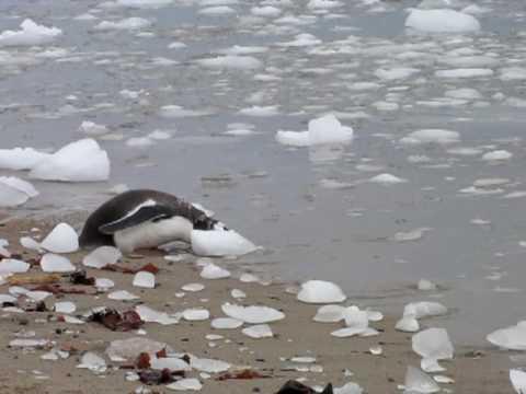 Antarctica20 Neko Harbour